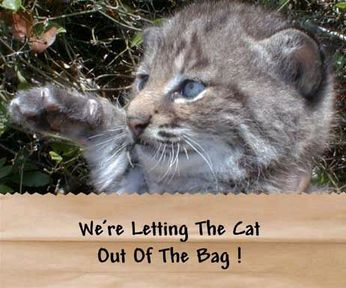 Cat_out_of_the_bag